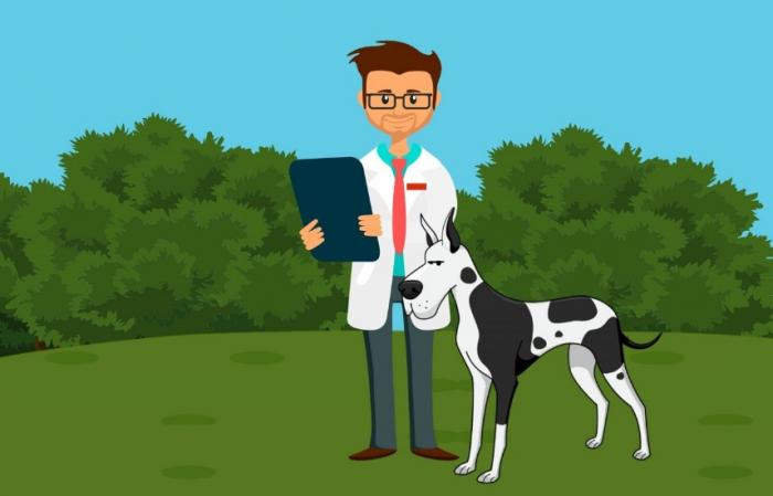 My Veterinary Job Board Has Officially Launched!