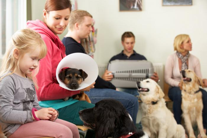 Create a More Welcoming Wait in Your Veterinary Hospital Lobby
