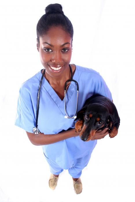 What are the Top Pros and Cons of Being a Vet Tech?